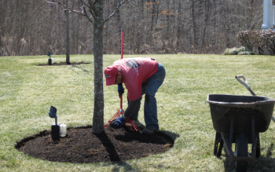 Mulching: Can you give me 5 reasons why Landscape management professionals do it?