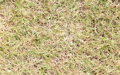 3 Tips For A Successful Franklin Lawn After Coming Off Of 2 Consecutive Dry Growing Seasons In A Row