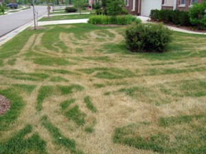 North Attleboro Landscaper; Lawn Mower tracks in my lawn?