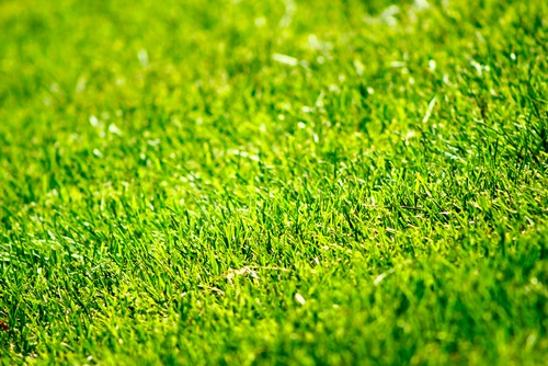 What Is A Self-Fertilizing Lawn In Norfolk?