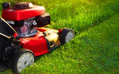 How Often Should You Mow The Lawn To Get The Best Results In Wrentham?