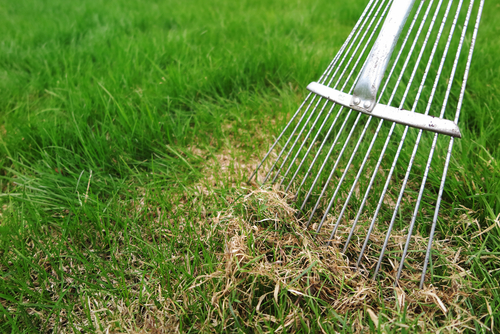 What is a Lawn Dethatching And Will It Help Your Mansfield Lawn?