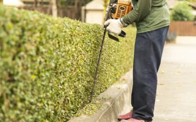 What Equipment Do You Need For Your Landscaping Maintenance In Norfolk?