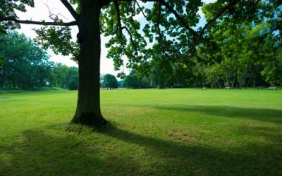 3 Tips To Grow Grass In Shaded Areas Around Wrentham
