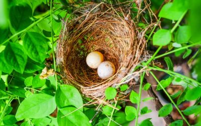 4 Backyard Landscaping Ideas To Attract Wildlife In North Attleboro