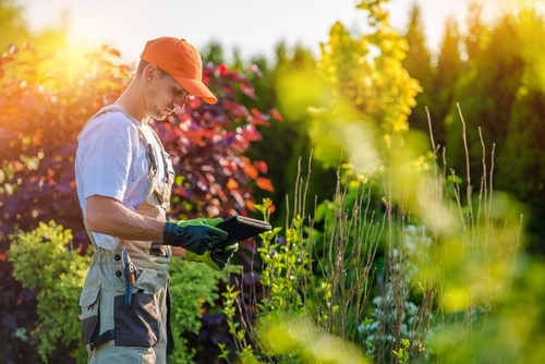 The Right Questions To Ask When Shopping For A Local Mansfield Lawn Care Company